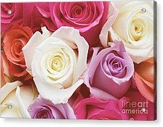 Romantic Rose Garden Acrylic Print by Kim Fearheiley
