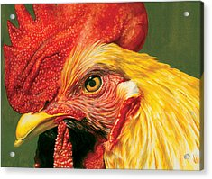Rooster Acrylic Print by Kelly Gilleran