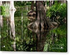 Roots Acrylic Print by Barbara Shallue