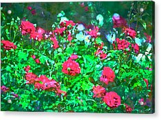 Rose 201 Acrylic Print by Pamela Cooper