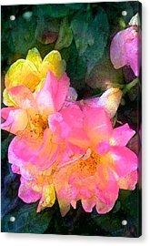 Rose 211 Acrylic Print by Pamela Cooper