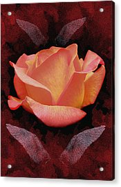 Rose From Angels Digital Art Acrylic Print by Costinel Floricel