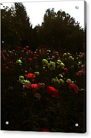 Rose Garden Acrylic Print by Lucy D