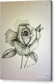 Rose In Monotone Acrylic Print by Pamela  Meredith