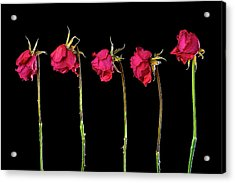 Rose Lineup Acrylic Print by Mauro Celotti