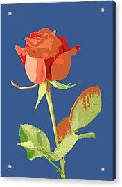 Rose On Blue Acrylic Print by Mauro Celotti