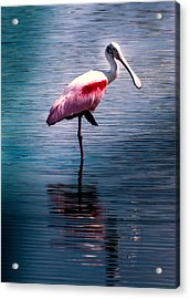 Roseate Spoonbill Acrylic Print by Karen Wiles