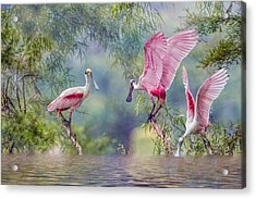 Roseate Spoonbill Trio Acrylic Print by Bonnie Barry