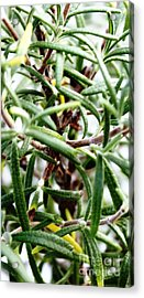 Rosemary's Babies Acrylic Print by French Toast