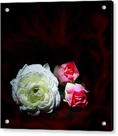 Roses Acrylic Print by Cecil Fuselier