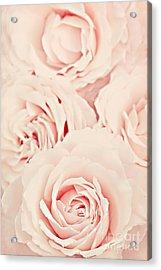 Roses Acrylic Print by Diana Kraleva