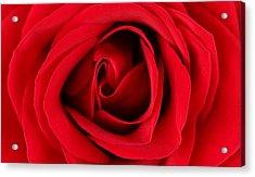 Roses For Life  Acrylic Print by Mark Ashkenazi