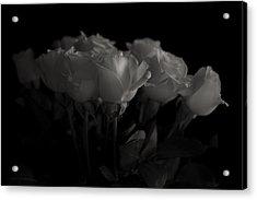 Roses Acrylic Print by Mario Celzner