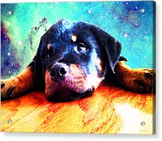 Rottie Puppy By Sharon Cummings Acrylic Print by Sharon Cummings