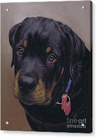 Rottweiler Dog Acrylic Print by Karie-Ann Cooper