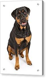 Rottweiler Dog With Drool Acrylic Print by Susan  Schmitz