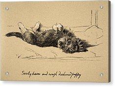 Rough Daschund Puppy Detail, 1930 Acrylic Print by Cecil Charles Windsor Aldin