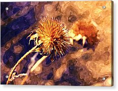 Round Wildflower Acrylic Print by Lanjee Chee