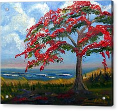 Royal Poinciana Morning Acrylic Print by Maria Soto Robbins