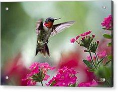 Ruby Garden Jewel Acrylic Print by Christina Rollo