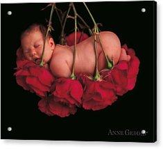 Ruby In Rose Acrylic Print by Anne Geddes