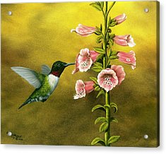 Ruby Throated Hummingbird And Foxglove Acrylic Print by Rick Bainbridge