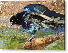 Ruffle My Feathers Acrylic Print by Lorri Crossno