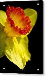 Ruffled Cup Acrylic Print by Caitlyn  Grasso