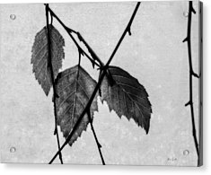 Rule Of Three Acrylic Print by Bob Orsillo