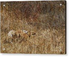 Run With Me Acrylic Print by Judy Wood
