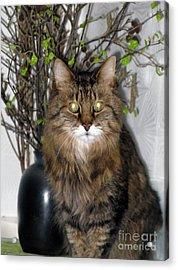Runcius- Palm Sunday Kitty Acrylic Print by Ausra Huntington nee Paulauskaite