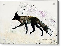 Running Fox Acrylic Print by Anderson R Moore