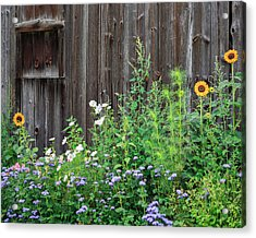 Rustic Barn Wood And Summer Flowers Acrylic Print by Bill Wakeley