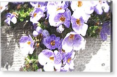 Rustic Planter Box Acrylic Print by Beverly Guilliams