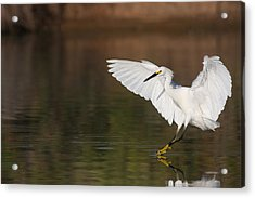 Safe Landing Acrylic Print by Ruth Jolly