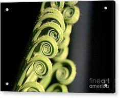 Sago Palm Leaf - 3 Acrylic Print by Kenny Glotfelty