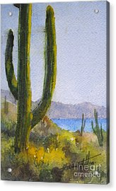 Saguaro Acrylic Print by Mohamed Hirji