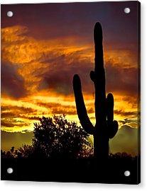 Saguaro Silhouette  Acrylic Print by Robert Bales