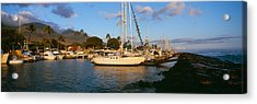 Sailboats In The Bay, Lahaina Harbor Acrylic Print by Panoramic Images