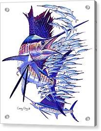 Sailfish Ballyhoo Acrylic Print by Carey Chen