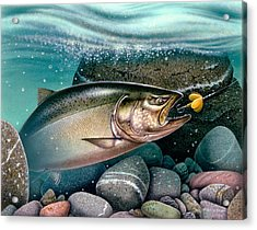 Salmon Stream Acrylic Print by Jon Q Wright