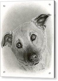German Shepherd Mix- Sami Acrylic Print by Sarah Batalka