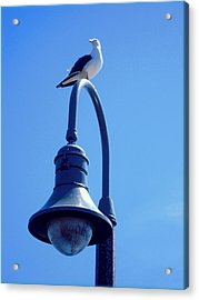 San Clemente Sea Gull  Acrylic Print by Don Struke