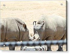 San Diego Zoo - 1212289 Acrylic Print by DC Photographer