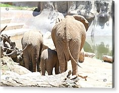 San Diego Zoo - 1212380 Acrylic Print by DC Photographer