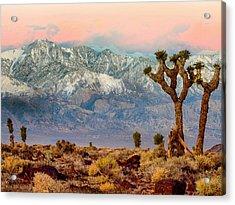 San Gorgonio Mountain From Joshua Tree National Park Acrylic Print by Bob and Nadine Johnston