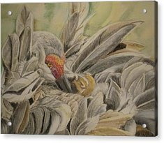Sandhill Crane And Chick Acrylic Print by Teresa Smith