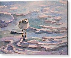 Sandpiper And Seafoam 3-8-15 Acrylic Print by Julianne Felton