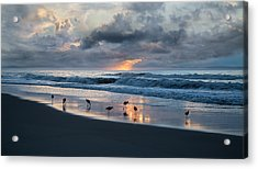 Sandpipers In Paradise Acrylic Print by Betsy Knapp