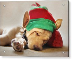 Santa's Helper Acrylic Print by Lori Deiter